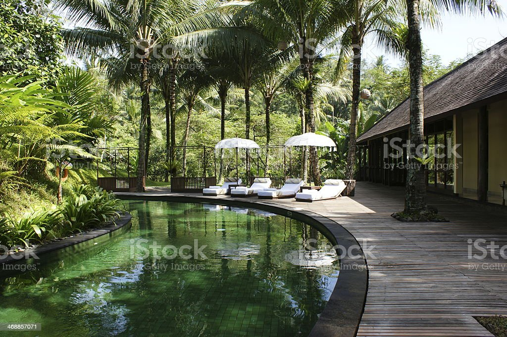 Swimming pool in the jungle stock photo