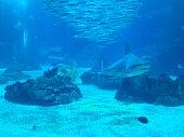 A shark swimming underwater