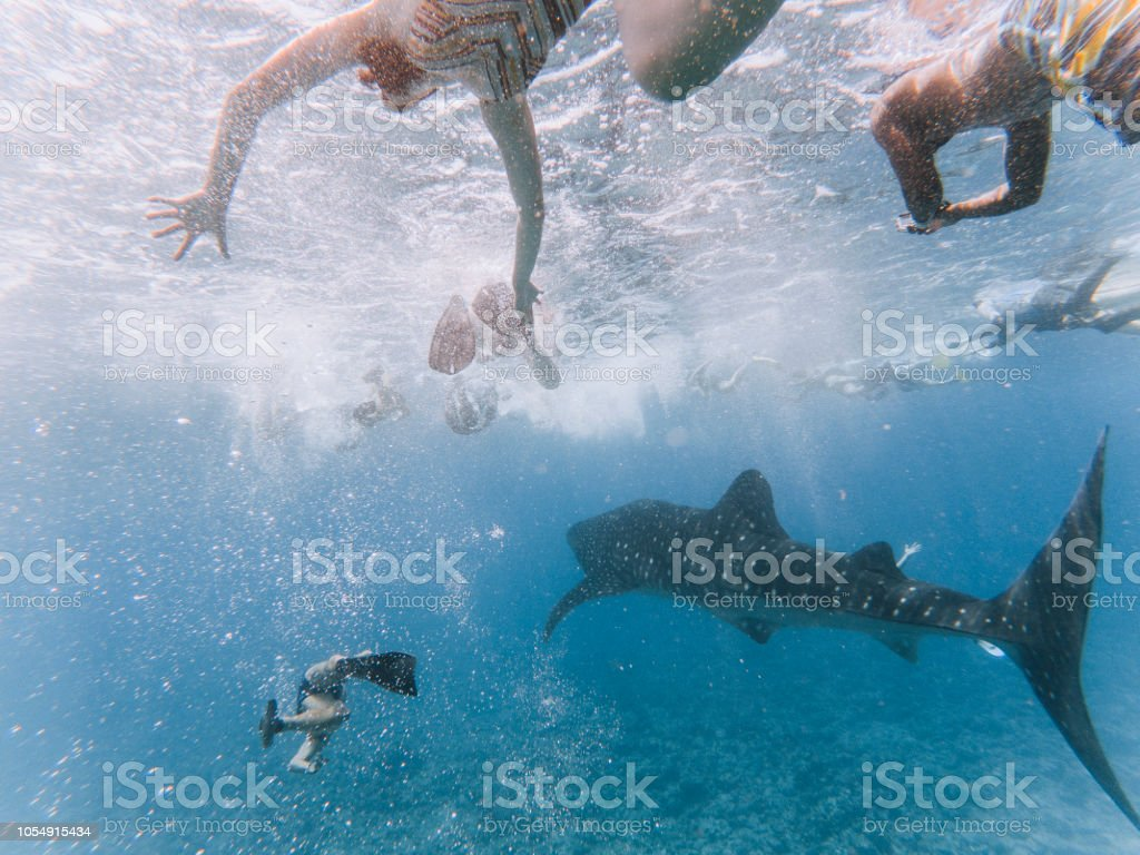 15 best images about Swim reference photos on Pinterest