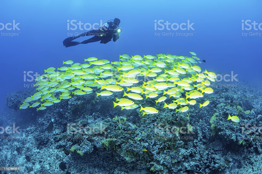 Swimming with fishes royalty-free stock photo