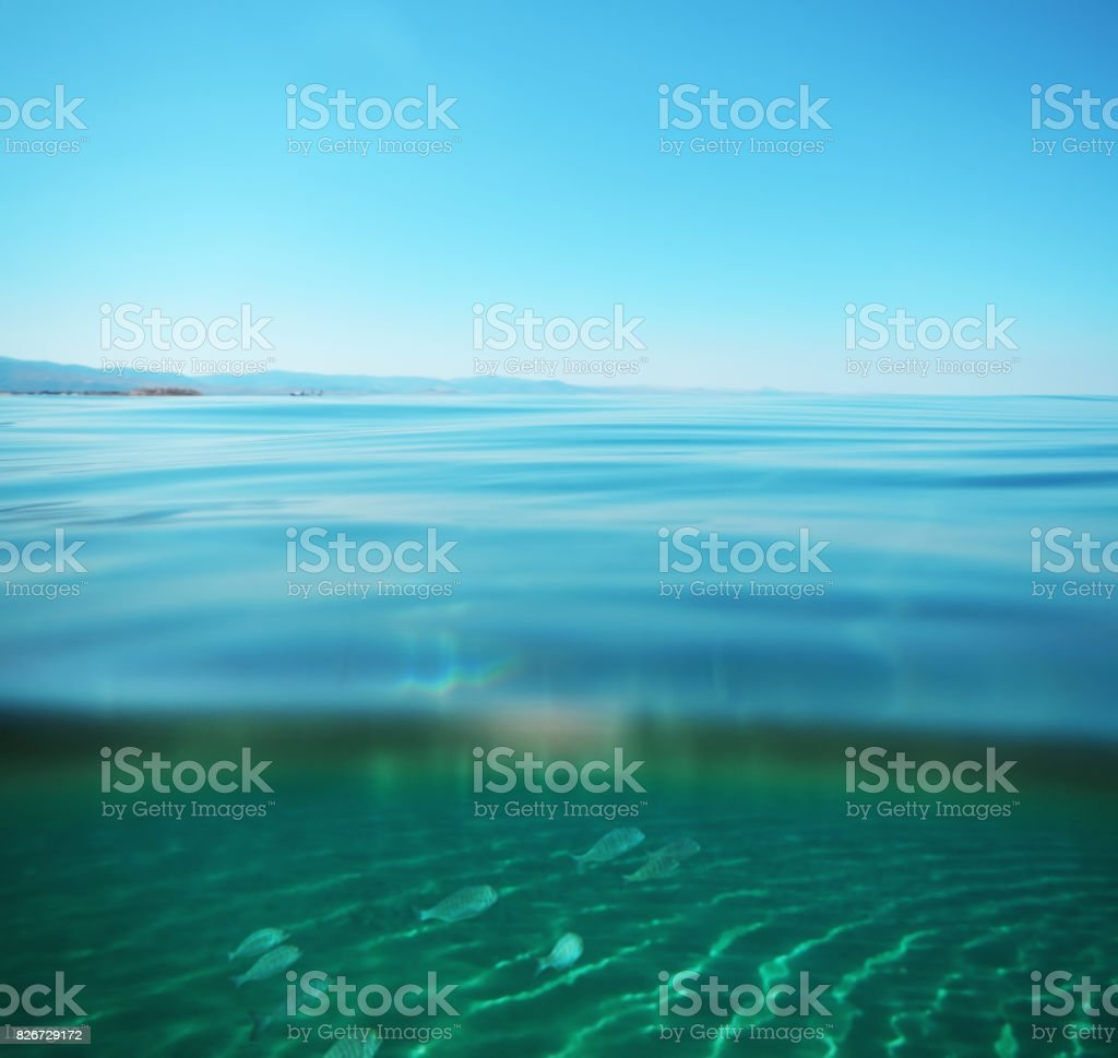 Swimming with fishes stock photo