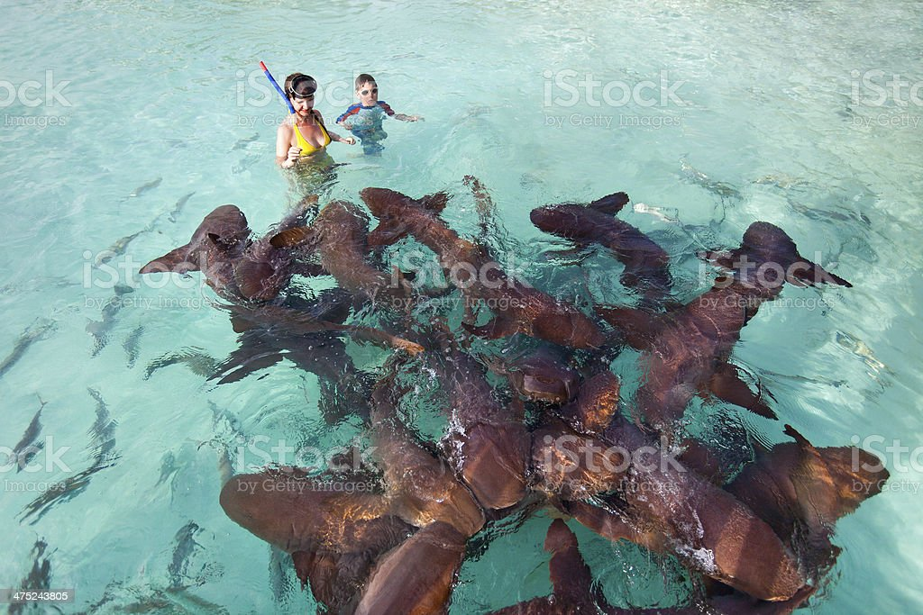 Swimming with nurse sharks stock photo