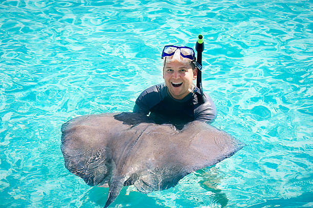 Swimming with the Stingrays stock photo
