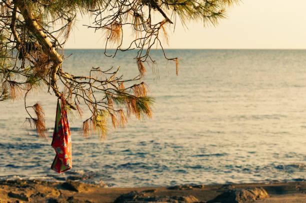 badeanzug hängt an einer kiefer am strand in der goldenen stunde bei sonnenuntergang - fkk strand stock-fotos und bilder