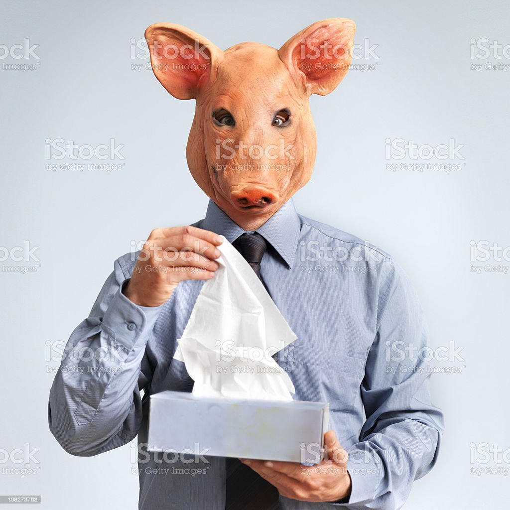 Swine Flu Concept, Man Wearing Mask with Pig Head royalty-free stock photo