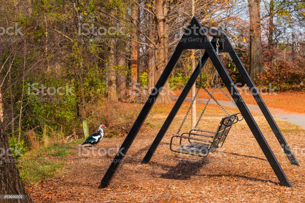 Swing and Muscovy duck in Piedmont park, Atlanta, USA stock photo