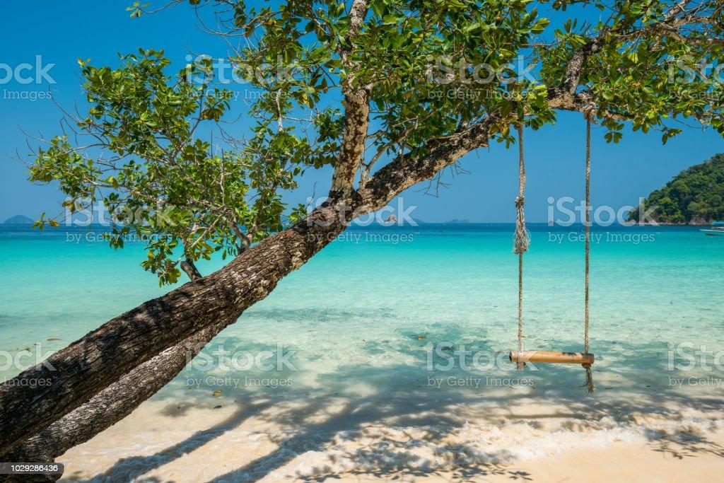 Schwingen Sie sich auf großen Baum auf Strand und Meer – Foto