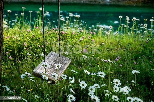 A close up of a rope swing among daisies.