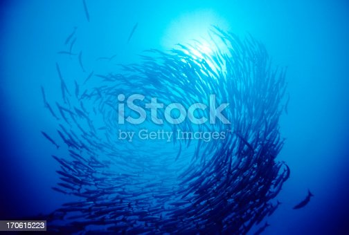 istock Swirl Of Fish 170615223