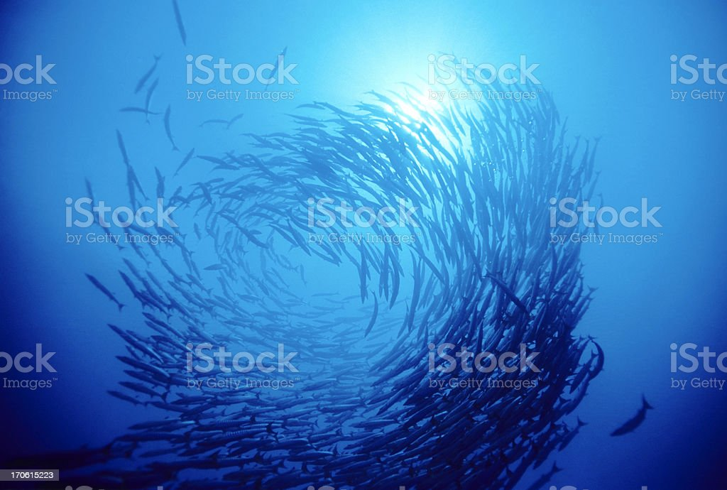 Swirl Of Fish stock photo