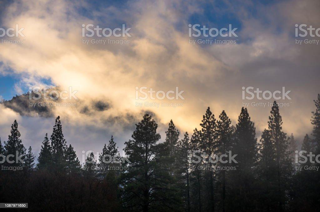 Swirling Fog Over Pines in Yosemite stock photo