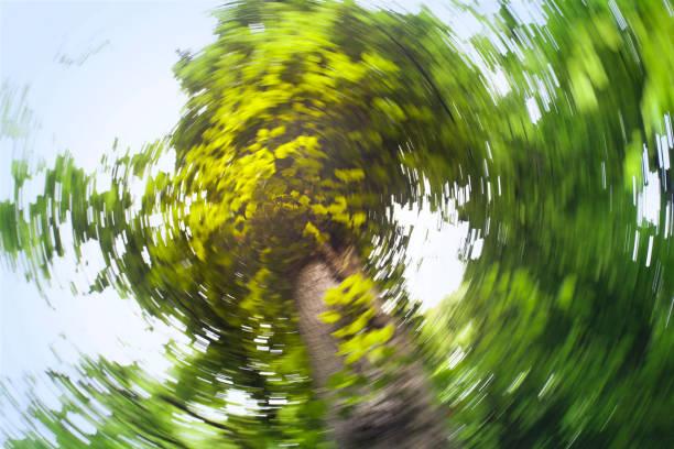 wirbelnde tree - höhenangst stock-fotos und bilder