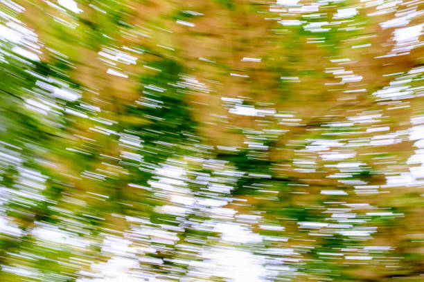 swirling trees stock photo