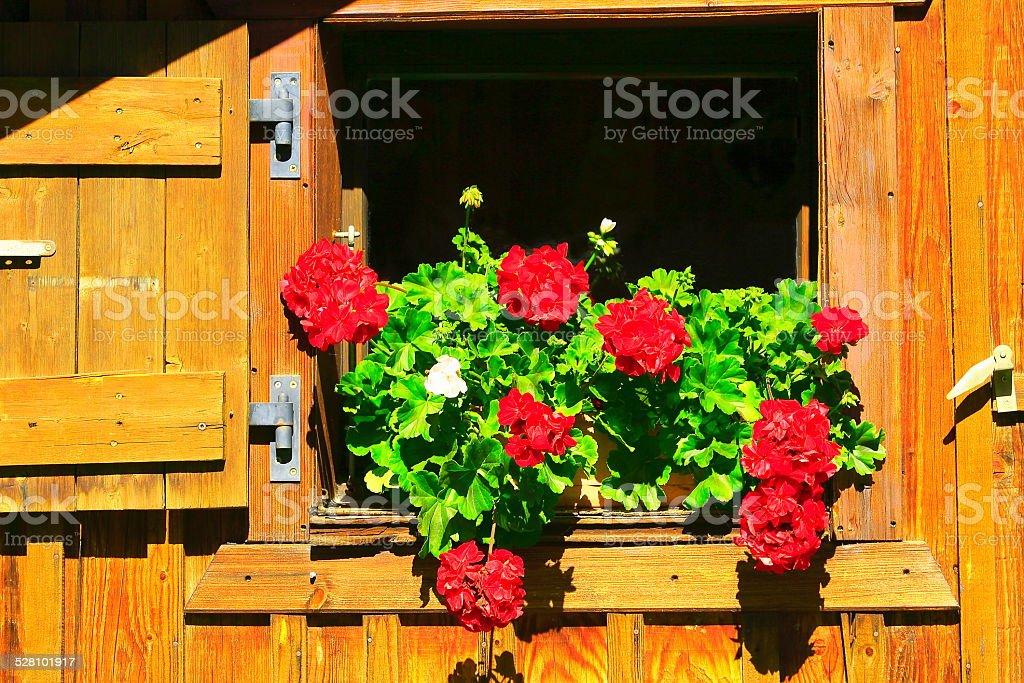 Swiss Alpine chalet-Berghütte Fenster und roten Blumen – Foto