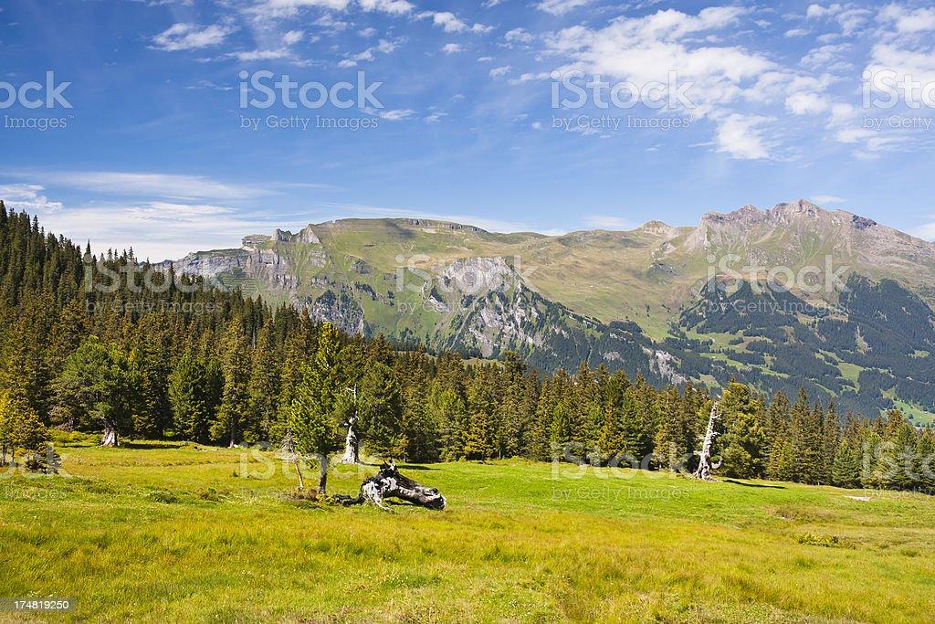Swiss Alps In Summer stock photo