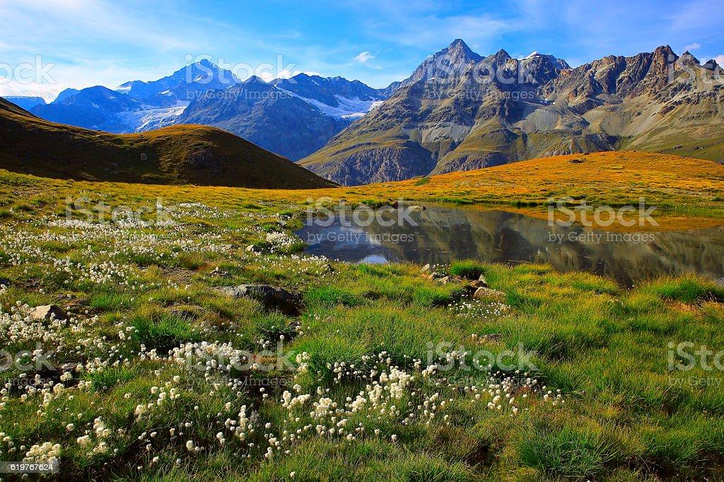 Swiss alps, lake reflection, golden autumn, cotton field, Zermatt stock photo