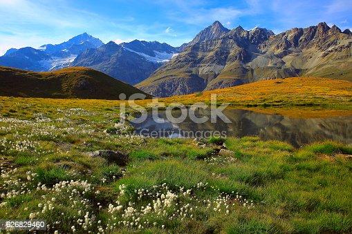 Swiss alps landscape: Alpine Lake reflection, cotton wildflowers meadows above Zermatt valley