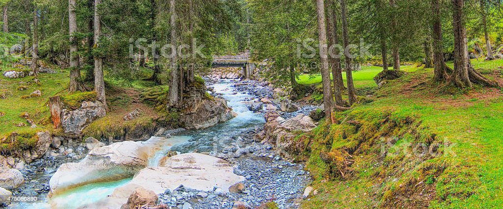Swiss alps mountain river and fir forest. stock photo