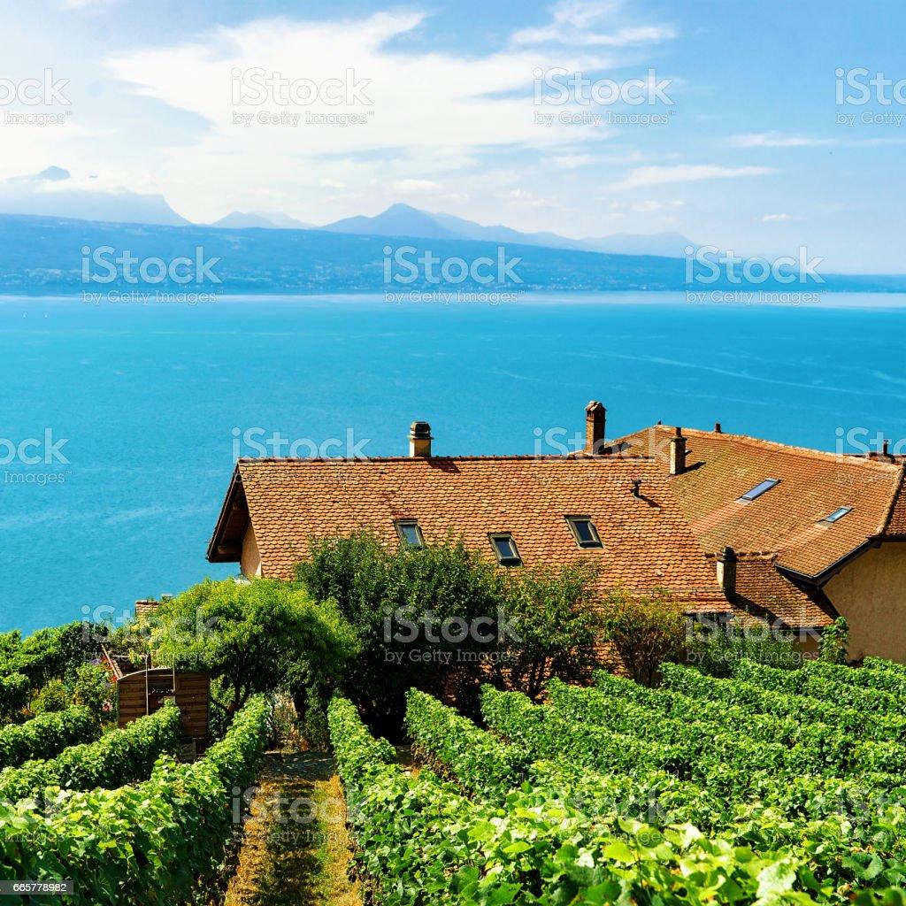Swiss Chalets on Vineyard Terrace hiking trail of Lavaux Switzerland stock photo