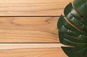 Swiss cheese plant (Monstera deliciosa)/ windowleaf on wooden background. Copyspace for text