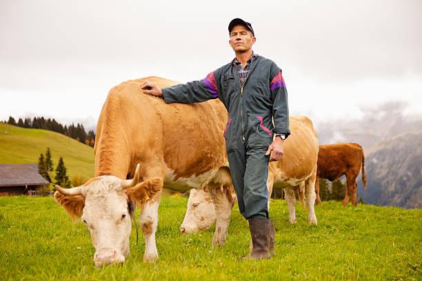 schweizer dairy farmers und seinen preis kühe - mensch isst gras stock-fotos und bilder