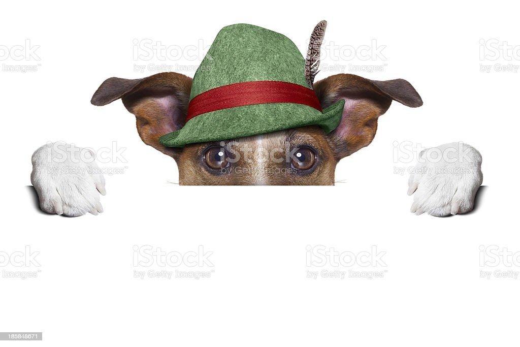 swiss dog stock photo