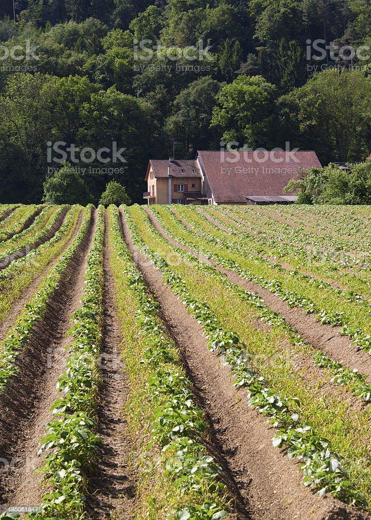 Swiss Farm stock photo
