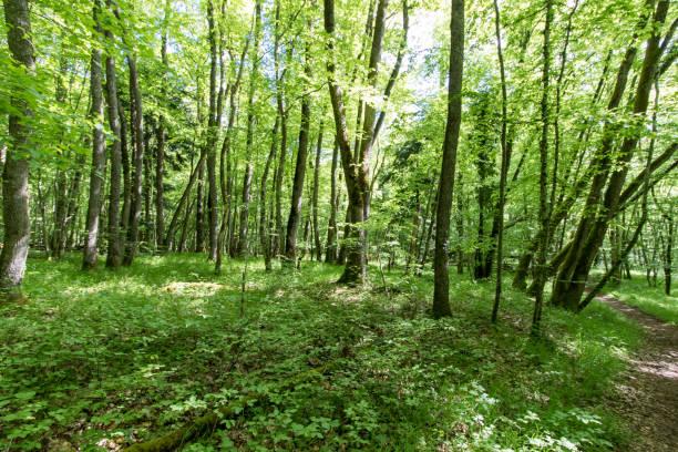 Schweizer Waldlandschaft erinnert an Ruhe und Gelassenheit – Foto