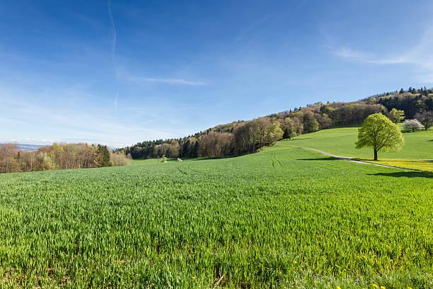 Schweizer Landschaft – Foto
