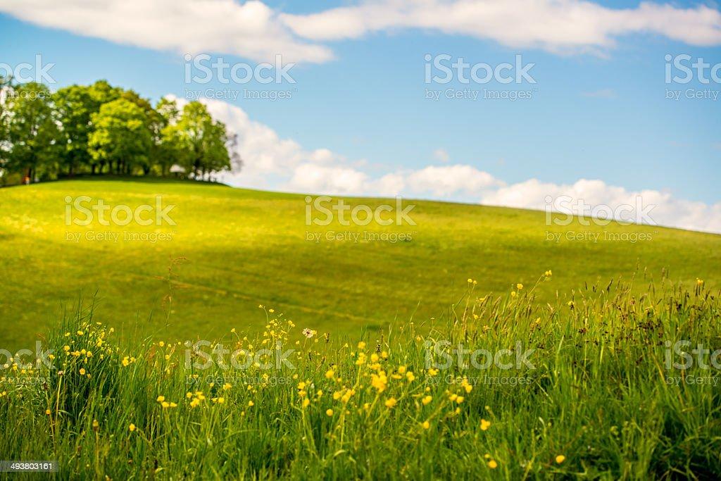 Swiss Landscape royalty-free stock photo