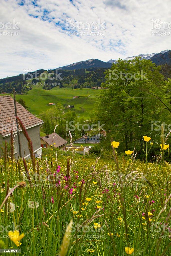Swiss meadow stock photo