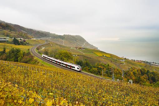 Swiss train in vineyard