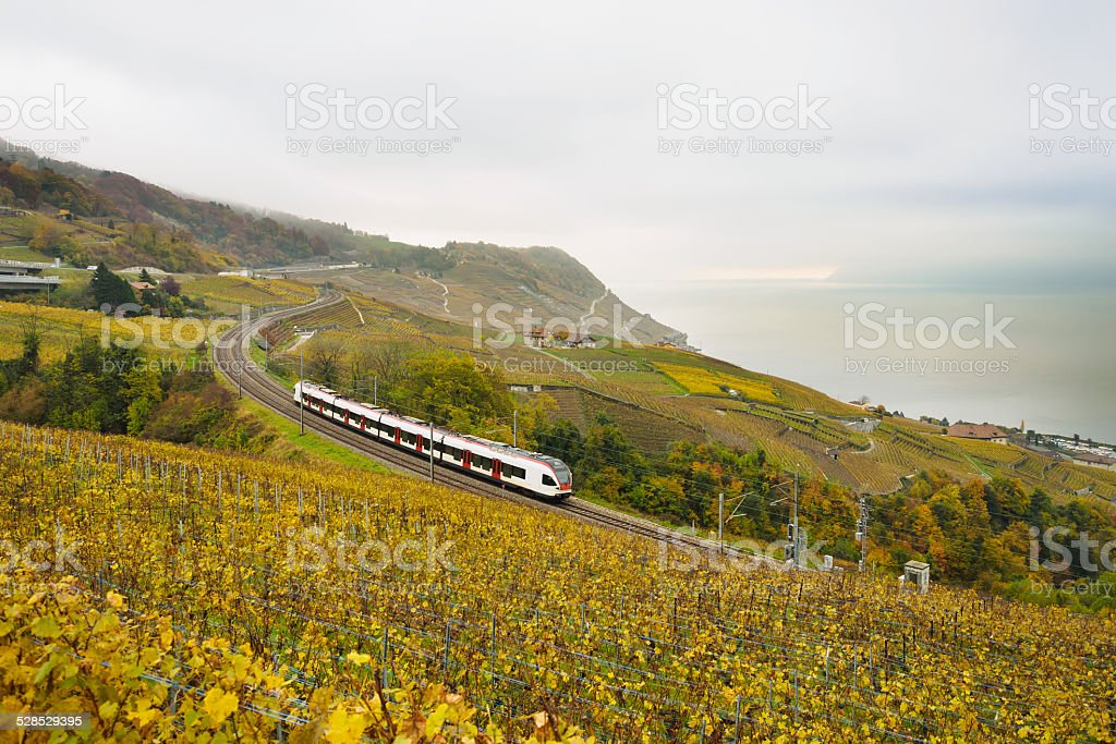 Swiss train in vineyard stock photo