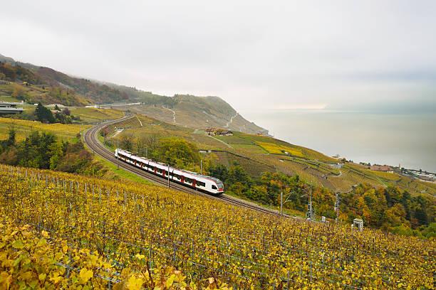 Swiss train in vineyard stock photo