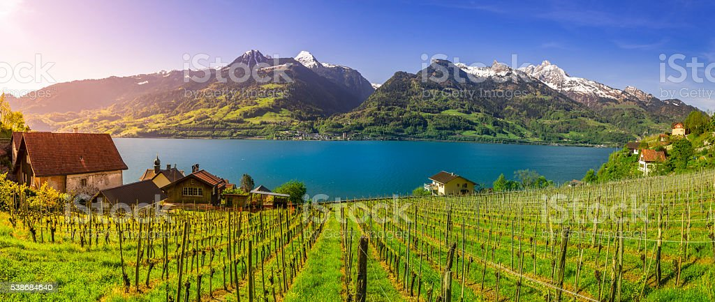 Swiss vineyard bordered by Walensee Lake and the Alps stock photo