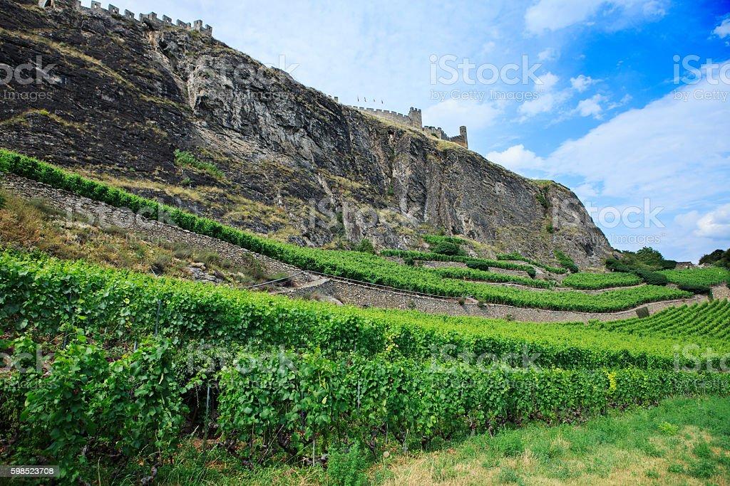 swiss vineyard stock photo