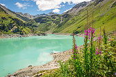 The turquoise waters of a lake in the Swiss alps surrounded by pink flowers called willowherb or fireweed (Chamerion angustifolium)