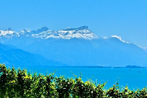 Suisse- Lac leman, vigne