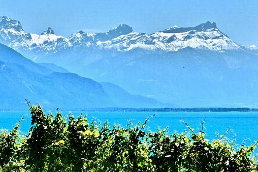Suisse - Lac leman, vignoble, neige