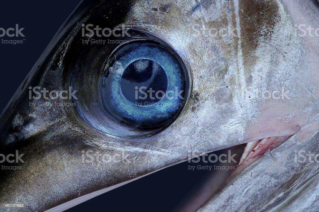 sword fish eye stock photo