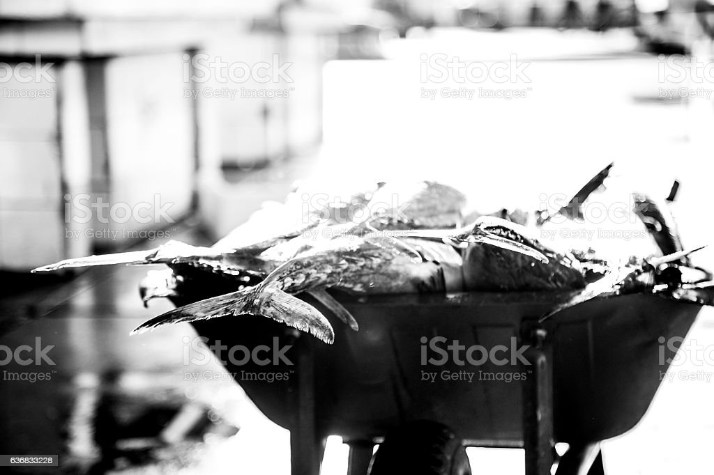 Sword Fish to be carried off to sell. stock photo