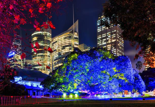 sy canlı 17 rbg mavi ağaç - rbg stok fotoğraflar ve resimler