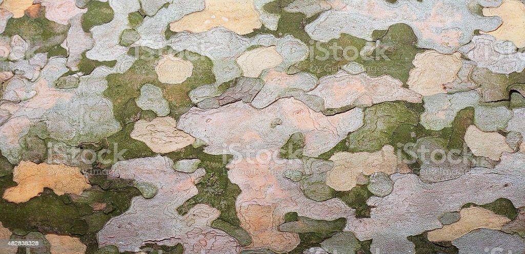 Sycamore bark texture.. stock photo