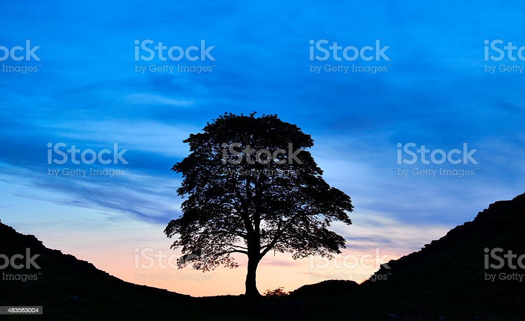 Sycamore Gap And Hadrian's Wall stock photo