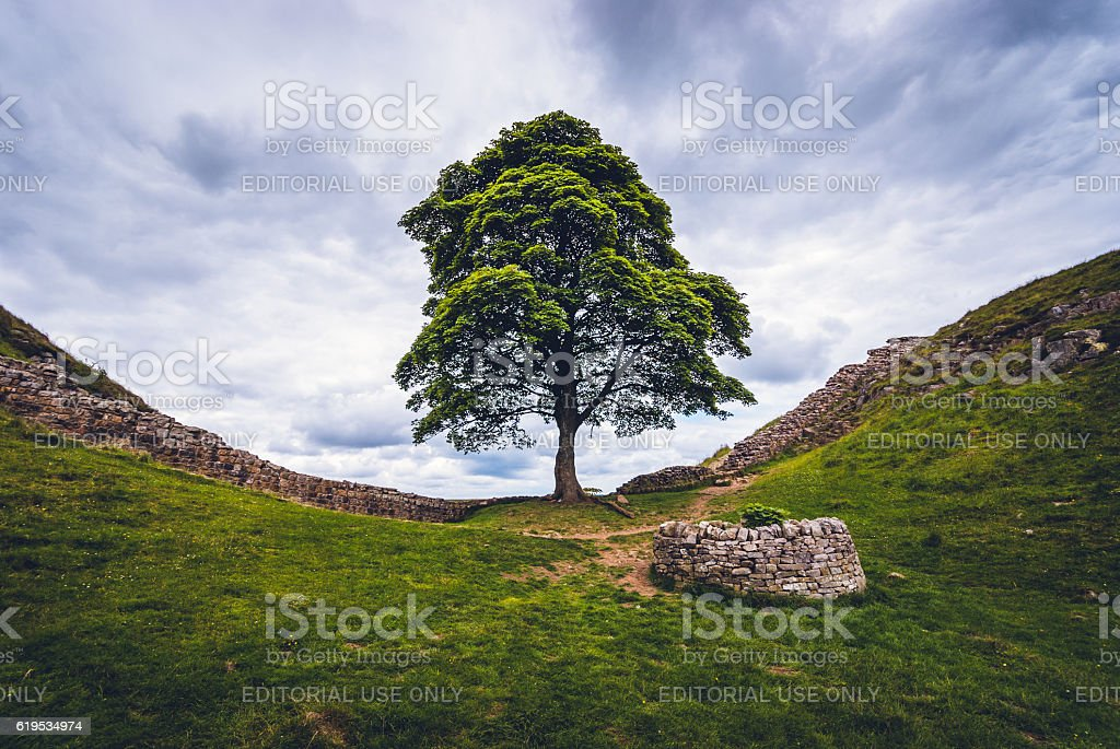 Sycamore Gap and Hadrian's Wall stock photo