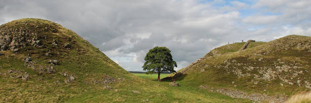 Sycamore gap, Hadrian's Wall, Northumberland Sycamore gap, Hadrian's Wall, Northumberland as featured in Kevin Costner's Robin Hood sycamore tree stock pictures, royalty-free photos & images