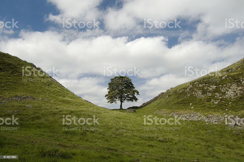 Sycamore Gap, Hadrians Wall royalty-free stock photo