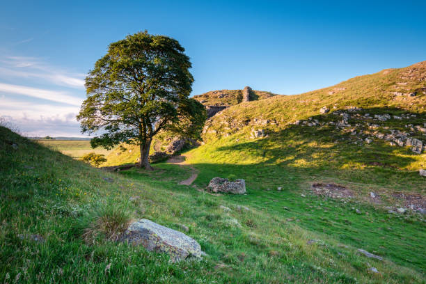 Sycamore Gap on Hadrian's Wall Hadrian's Wall is a World Heritage Site in the beautiful Northumberland National Park. Popular with walkers along the Hadrian's Wall Path and Pennine Way sycamore tree stock pictures, royalty-free photos & images