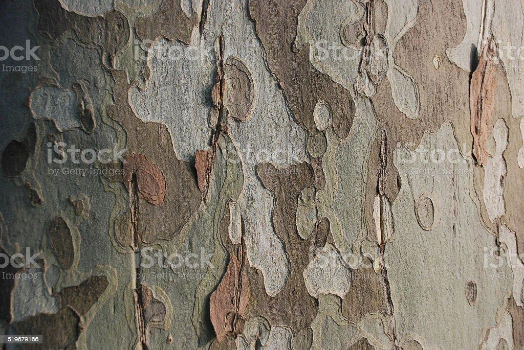 Sycamore Tree Bark II stock photo