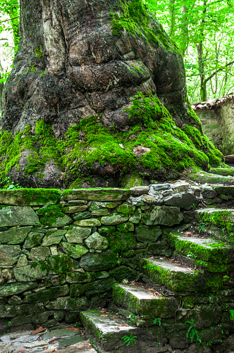 Sycamore Trunk And Old Stone Stairs Near It — стоковые фотографии и другие картинки Абстрактный